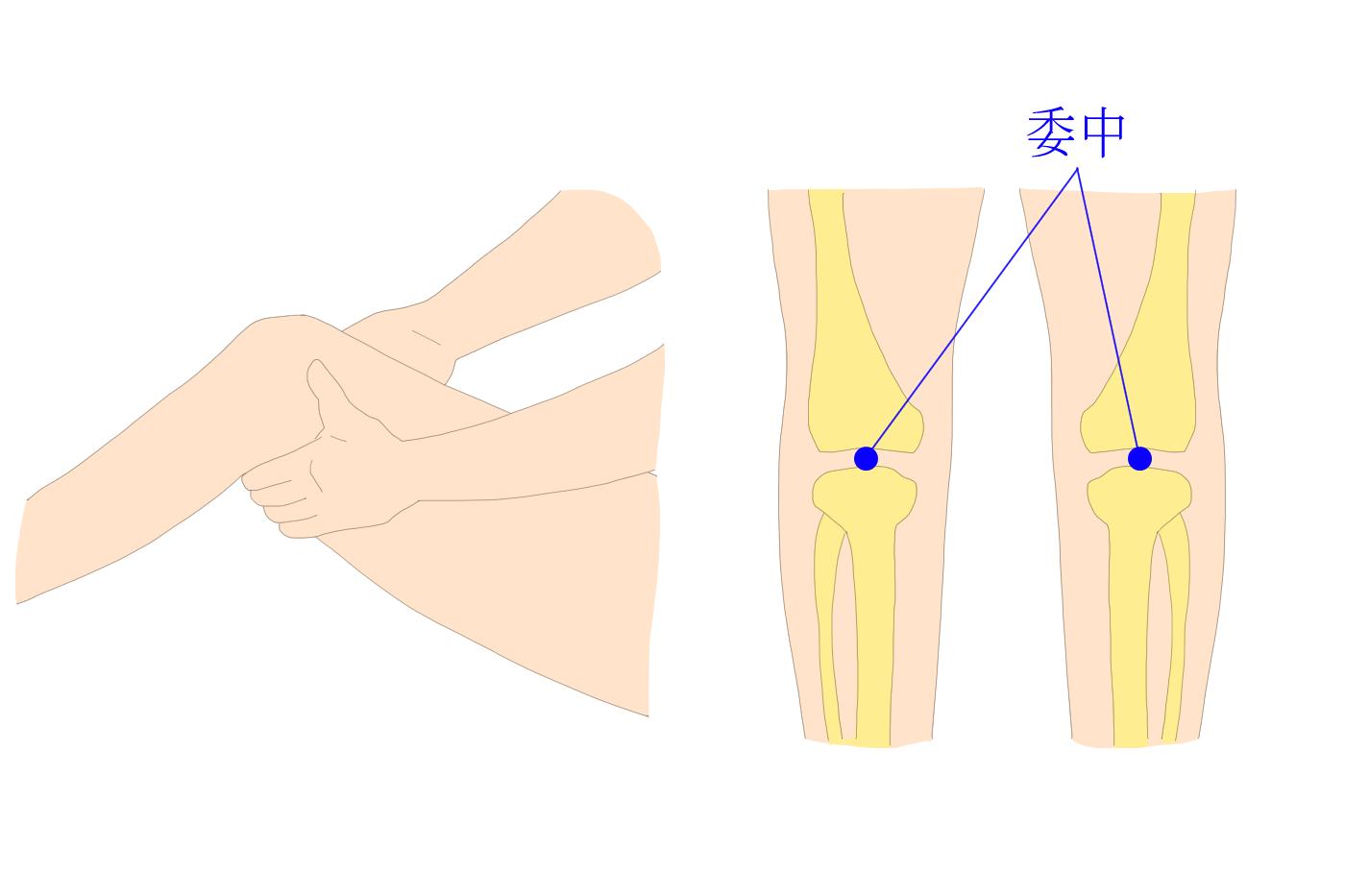 ツボ 膝 関節 痛 【股関節のツボ】痛みや違和感をセルフケアできるツボを徹底解説